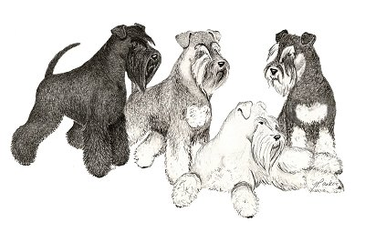The Miniature Schnauzer Club